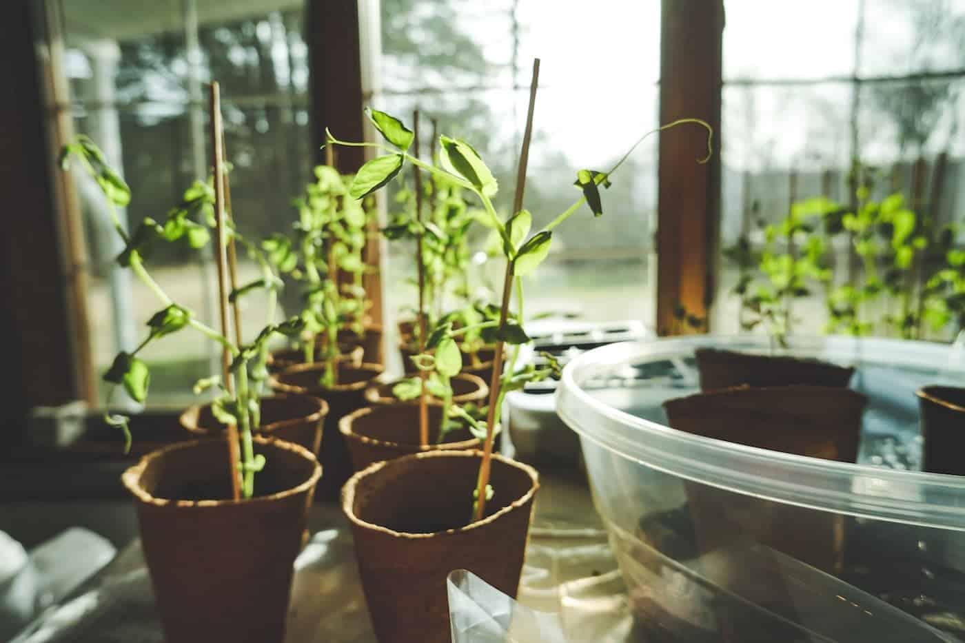young seeds and plants growing to represent business growth