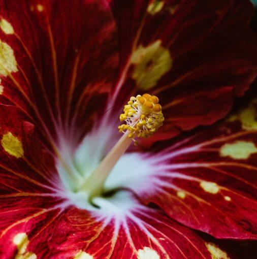 flower opening
