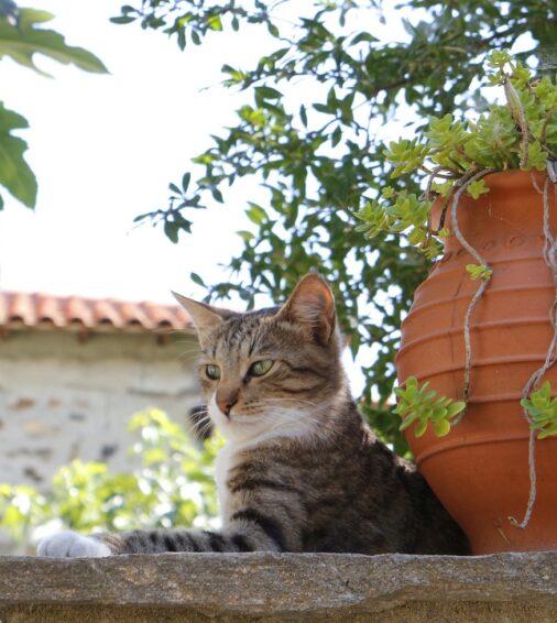 Cat surveying surroudings